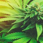 Is Marijuana a Gateway Drug? 5 Solutions